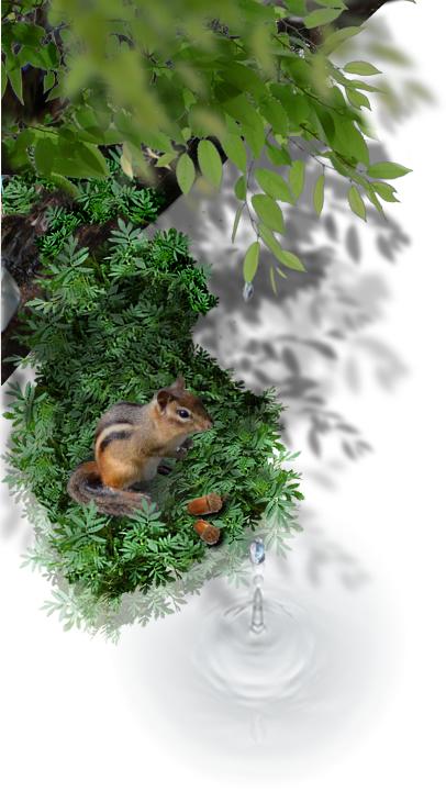 森と自然を守る自然循環活動